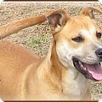 Adopt A Pet :: Bailey--Adoption Pending - Marlborough, MA