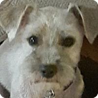 Adopt A Pet :: Wesley - MINNEAPOLIS, KS