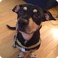 Adopt A Pet :: Tank - Windermere, FL