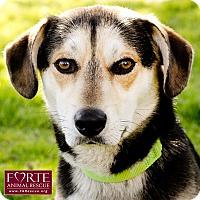 Adopt A Pet :: Bueller - Marina del Rey, CA