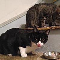 Adopt A Pet :: Baby & Beebee - Philadelphia, PA