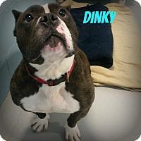 Adopt A Pet :: Dinky - Muskegon, MI
