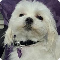 Adopt A Pet :: Sugar - San Dimas, CA