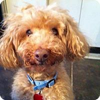 Adopt A Pet :: Benny - Wilmington, DE