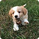 Adopt A Pet :: Sadie's Clyde