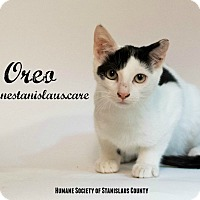 Adopt A Pet :: Oreo - Modesto, CA