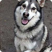 Adopt A Pet :: MYAGI - Seattle, WA