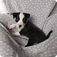Adopt A Pet :: Gene Carson - Newport, KY