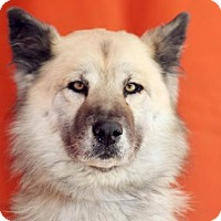 Adopt A Pet :: Kayla - Santa Clarita, CA