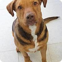 Adopt A Pet :: Cecil - Yukon, OK