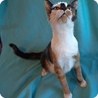 Adopt A Pet :: Confetti - Allentown, PA