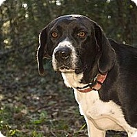 Adopt A Pet :: *Margaret - PENDING - Westport, CT