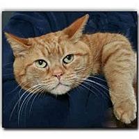 Adopt A Pet :: Butters - Howell, MI