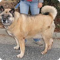 Adopt A Pet :: Mojo - Hayward, CA