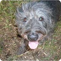 Adopt A Pet :: Annie - Mission Hills, CA