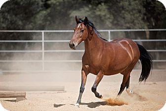 Pony - Other Mix for adoption in El Dorado Hills, California - Kewpie