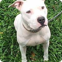 Adopt A Pet :: Cloud - Chicago, IL