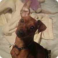 Adopt A Pet :: Eli (FENCED YARD REQUIRED) - McDonough, GA