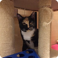 Adopt A Pet :: Madeline - Foothill Ranch, CA