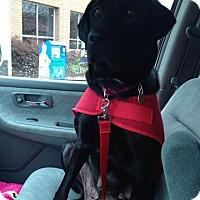 Adopt A Pet :: Allie - Sinking Spring, PA