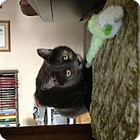 Adopt A Pet :: Heather - Novato, CA