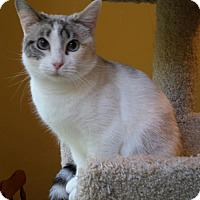 Adopt A Pet :: Ming - Knoxville, TN