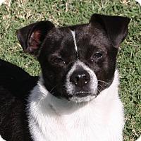 Adopt A Pet :: Oreo - Edmonton, AB