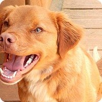 Adopt A Pet :: Copper - Anderson, SC