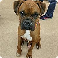 Adopt A Pet :: Hershey - Wilmington, NC