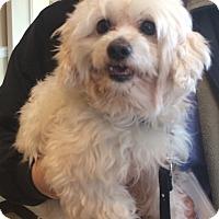 Adopt A Pet :: Reiner - Oak Ridge, NJ