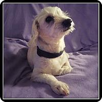 Adopt A Pet :: Nugget - San Dimas, CA