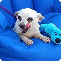 Adopt A Pet :: Angel - Rockaway, NJ