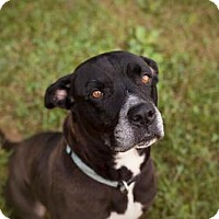 Adopt A Pet :: Daphne - Indianapolis, IN