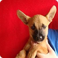 Adopt A Pet :: Miller - Oviedo, FL