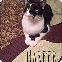Adopt A Pet :: Harper - Columbus, OH