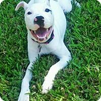 Adopt A Pet :: Luna - Navarre, FL