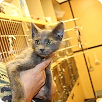 Adopt A Pet :: Gregory - Rochester, MN