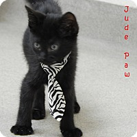 Adopt A Pet :: Jude Paw - Bucyrus, OH