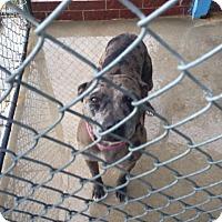 Adopt A Pet :: Mocca - Aurora, MO