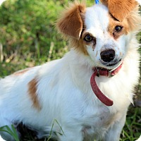 Adopt A Pet :: Sissy - Brownsville, TX
