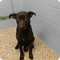 Adopt A Pet :: A499612 - San Bernardino, CA