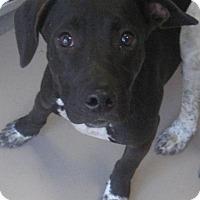 Adopt A Pet :: mallikan - Johnson City, TN
