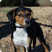 Adopt A Pet :: Bubbles - Conway, AR