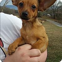 Adopt A Pet :: Penny - Allentown, PA