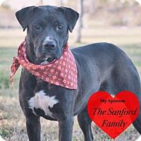 Adopt A Pet :: Abigail - San Leon, TX