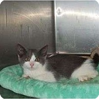 Adopt A Pet :: Tripod Lucky Lucy - McDonough, GA