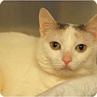 Adopt A Pet :: Gemma - Lunenburg, MA