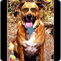Adopt A Pet :: Brody - Scottsdale, AZ