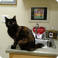 Adopt A Pet :: Maya - Wakinsville, GA