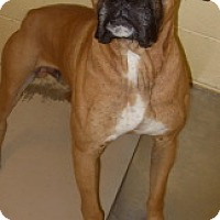 Adopt A Pet :: Riley - Brentwood, TN